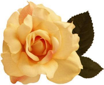 An idea bursts into flower